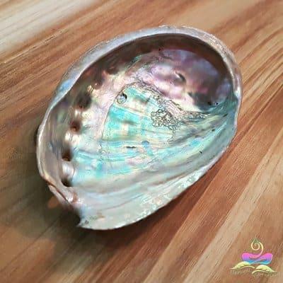 Small Abalone Shell Natural Vibrations